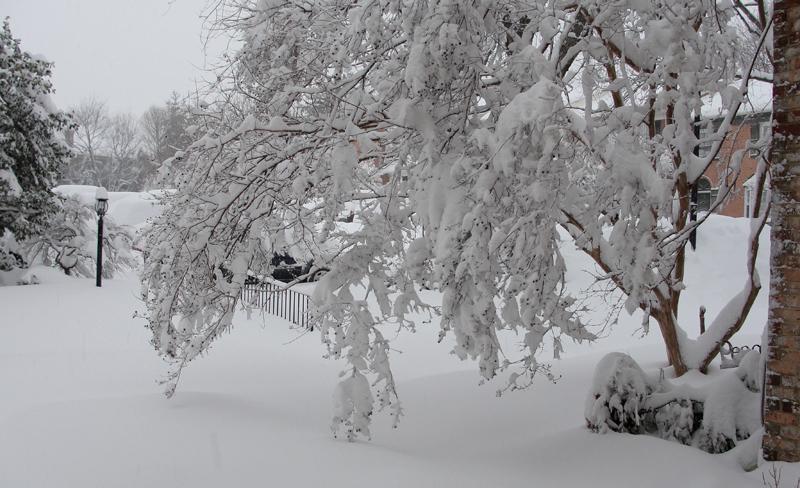 snowy_day_final_72