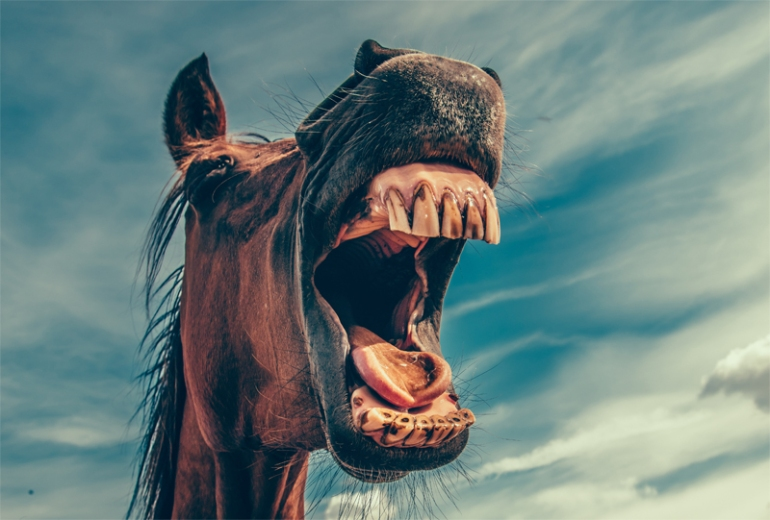 horse_mouth_72